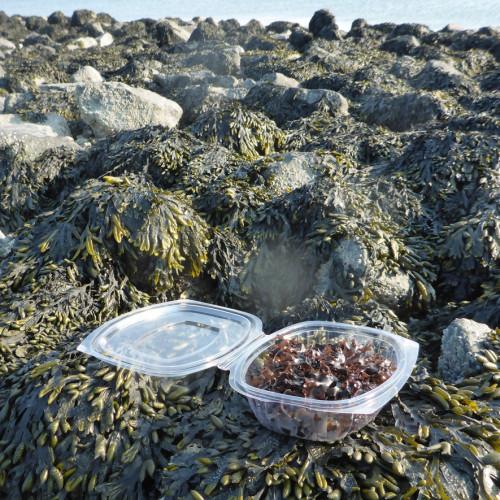 Abonnement op vers zeewier vanaf april